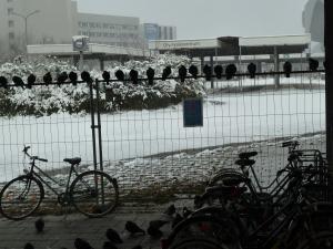 Tauben der Hoffnung?  Verlassen Olympiazentrum Busbahnhof PIGEONS OF HOPE, EMPTY OLD BUS STOP OLYMPIAZENTRUM (c) Daniel Zylbersztajn