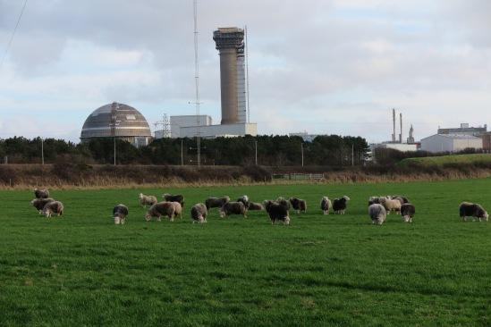 Wolle über den Augen, Sellafield.JPG
